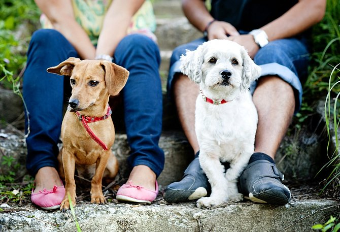 Máte-li čtyřnohého mazlíčka, určitě s ním choďte na dlouhé procházky. Podle statistik mají pejskaři oproti nepejskařům 6x větší šanci se seznámit.