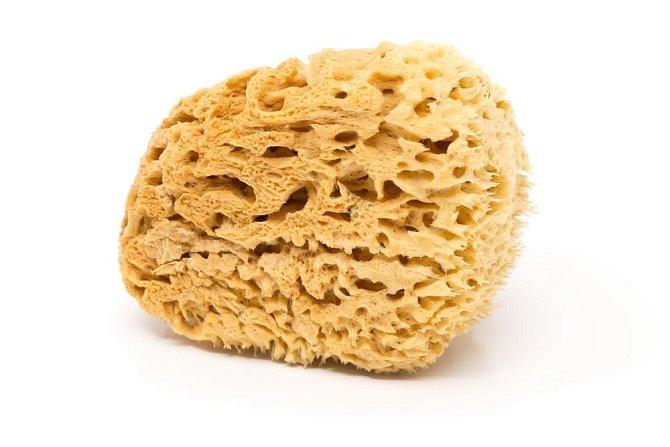 Houba na mytí: 2 týdny V pórech mycích hub se drží vlhkost, a tudíž se zde dařím bakteriím případně i plísním. Podle matriálu můžete houby vyvařit, pokud to nejde, po čtrnácti dnech se jich zbavte.