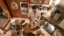 I v kuchyni hrají kočky prim.