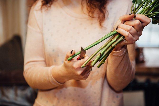 Květiny se nestříhají, ale pouze řežou ostrým nožem.
