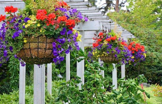 Velmi dobře vypadají závěsné květinové koše