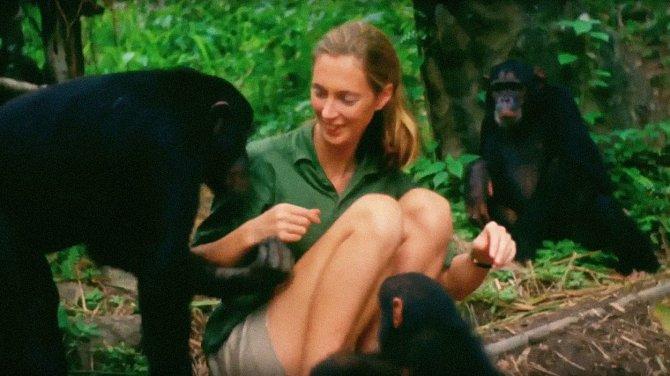 Dokonce se stala i členkou šimpanzí rodiny.