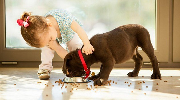Pomoc, moje dítě chce psa!