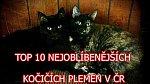 Nejoblíbenější psí a kočičí plemena v ČR