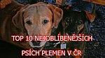 Nejoblíbenější psí plemena v ČR