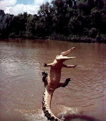 """Ženy také zkoušely vagíny """"vystlat"""" krokodýlím trusem..."""