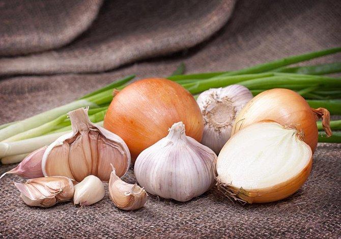 Ilustrační foto - cibule a česnek