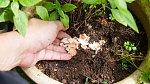 Skořápky vytvoří kolem květin a sazenic nedobytné hradby. Slimáci se neodváží.