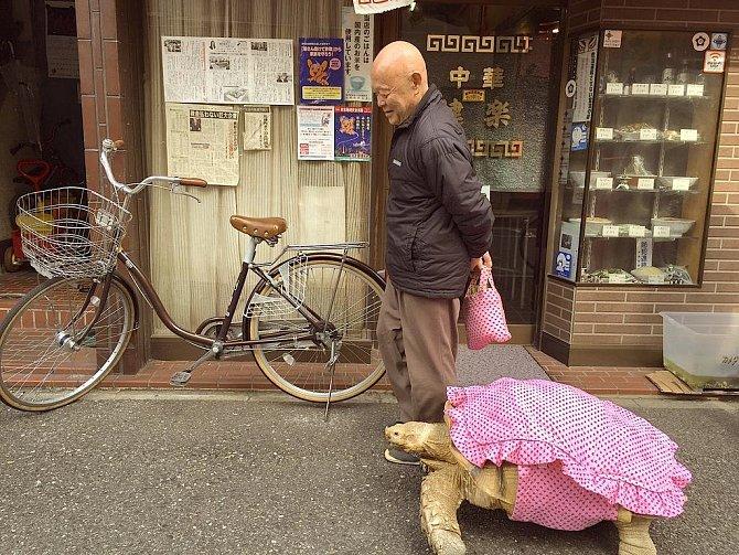 Jeden muž z Číny má doma želvičku. Tedy, docela velkou želvu. Chodí s ní na procházky a dává jí oblečky.
