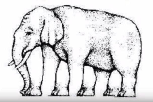 Tohle je zajímavý test. Dokážete spočítat, kolik nohou má slon na obrázku? Máte na to 20 vteřn.