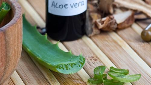 Rostlina, která léčí – Aloe Vera