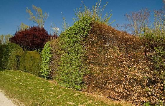 Ukázka živých plotů z různých dřevin v areálu Garden Tulln.