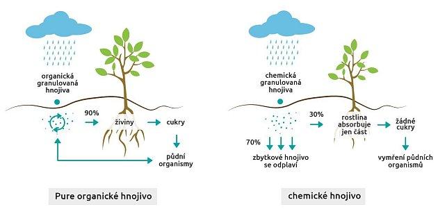 Srovnání působení organominerálního hnojiva s chemickým hnojivem.