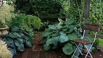 Rostliny zasahující na terasu ji krásně propojují s okolní zelení