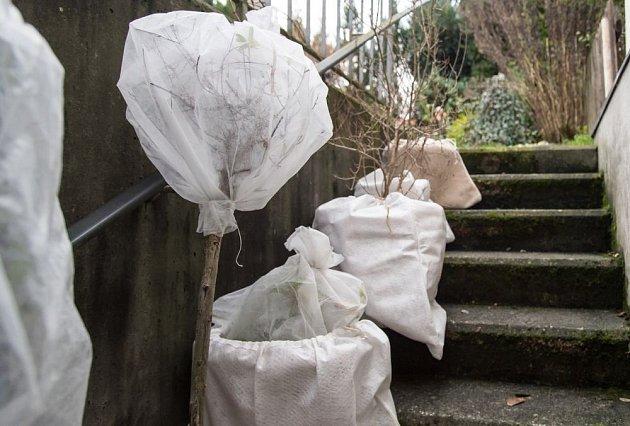 Netkanou textilií můžeme obalit nádoby i celé rostliny