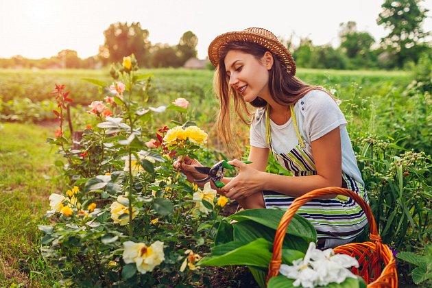 """Není od věci zbavit květiny suchých a nehezkých listů, hned bude váš květinový záhon mnohem více """"fresh"""""""