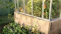 Ve skleníku dozrávají rajčata, využité je i jeho okolí.
