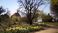 Botanickou zahradu hl. města Prahy najdeme v Troji.
