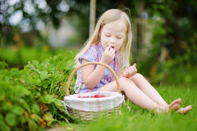 Jahůdky, zdravá pochoutka nejen pro děti