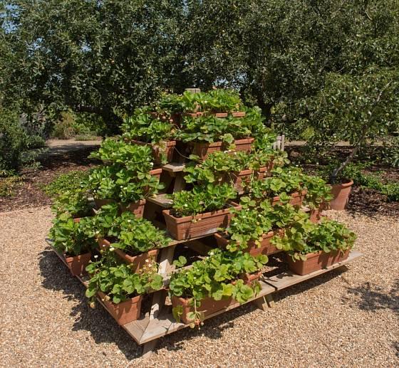 Pěstování jahod v pyramidě je úsporné namísto i zeminu.