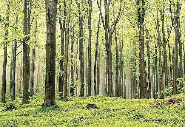 jarní bukový les