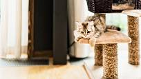 Škrabadla pro kočky jsou obtočena pevnými provazy.