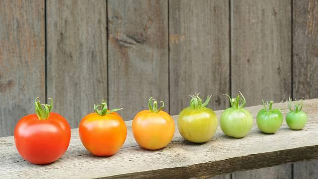 Nezrají vám rajčata? Zkuste pár tipů na dozrání od profesionálů.