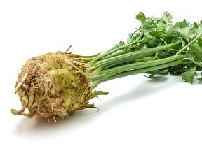 Bulvový celer