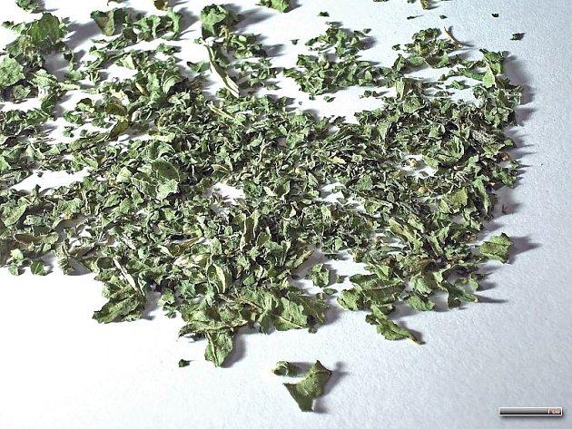 Čaj ze sušené kopřivy je v zimě požehnáním. Někteří lidé by s ním přesto měli nakládat opatrně.