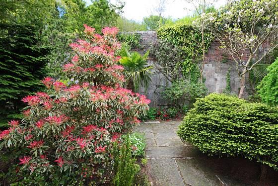 Pierisy se uplatní v různých typech zahrad.