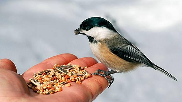 Výsledek obrázku pro krmení pro ptáčky