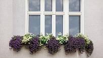 Zajímavou variantou osázení okenních truhlíků je symetrické uspořádání.