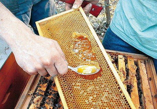 Zavíčkované medové plástve