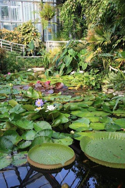 jezírko ve skleníku botanické zahrady Na Slupi