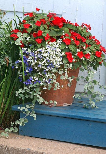 Každý den vás na schodišti u domu může přes léto vítat zajímavě sesazená kompozice rostlin, jimž vévodí netýkavka balzamína.