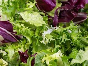 Salátové listy očima experta: Jak poznat, že jsou ještě příliš hořké?