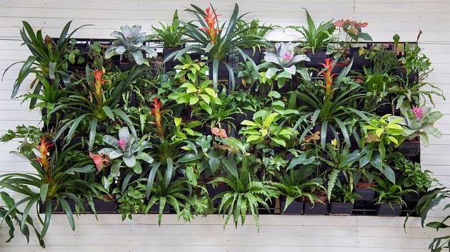 Bromélie a kapradiny vypadají v zelené stěně přirozeně