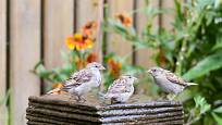 Bublající fontánka vhodného tvaru poslouží i jako ptačí napajedlo a koupadlo