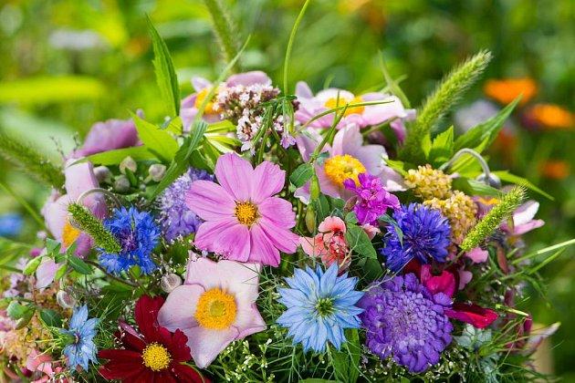 Z letniček vytvoříme i krásnou kytici: černuchy, krásenky, chrpy aj