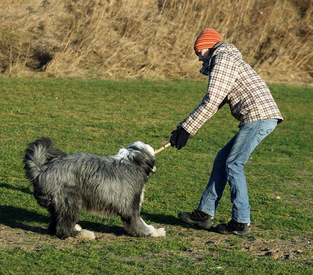 Na počátku 21. století byly bearded collie zvoleny jako nejlepší canisterapeutický pes, a to svědčí o mnohém.