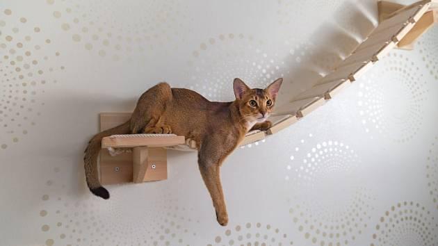 Prolézačka pro kočku upevněná na stěně