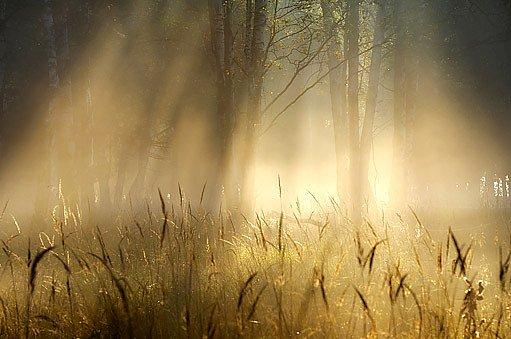 ranní mlh ase na podzim často rozplyne
