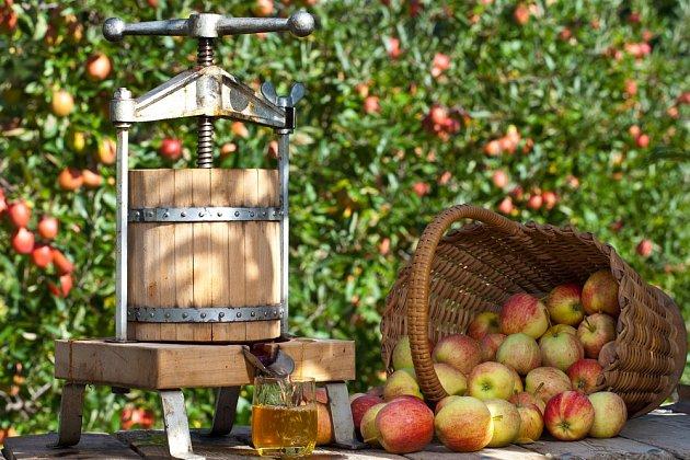 Lis na výrobu domácího jablečného moštu.