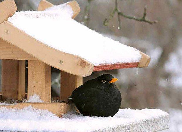 Ptačí laskominy na krmítku