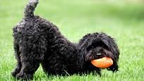 pískací balonky potěší každého psa