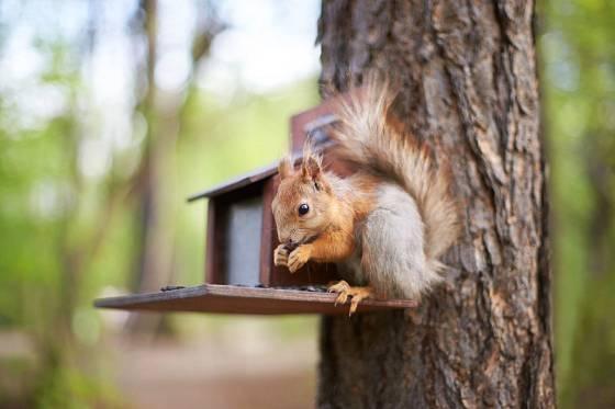 Plné krmítko veverky ocení i na jaře, když musí uživit svá mláďata
