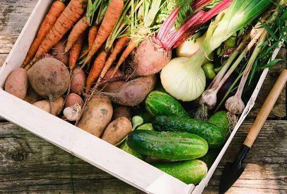 Pravidelné dodávky bedýnek se zeleninou