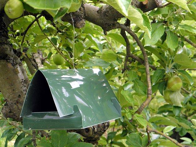 feromonový lapač na obaleče jablečného