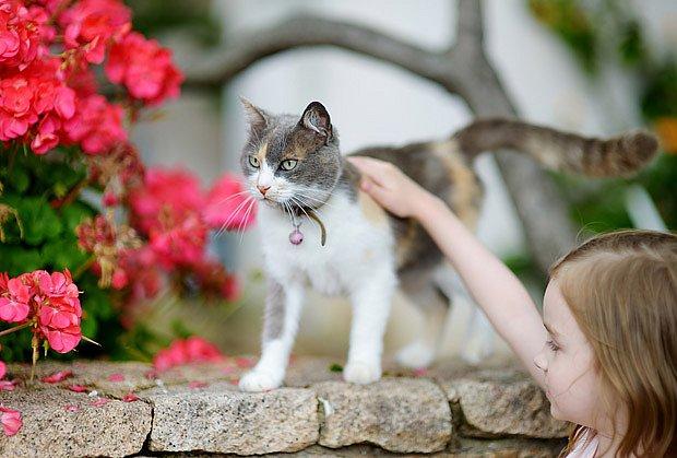 Kočky zahubí mnoho ptáků, rolnička tomu většinou zabrání