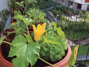 Nevlastníte zahrádku, a přesto chcete pěstovat zeleninu, bylinky či květiny? Zkuste to na balkoně